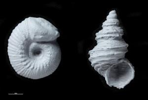 Paleontologia, Fossili, Antichità