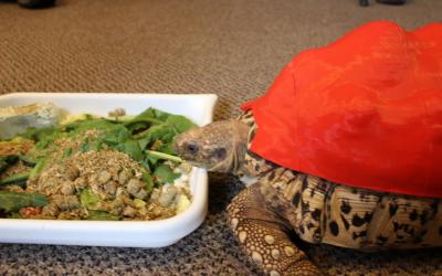 Gusci di tartaruga stampati in 3D