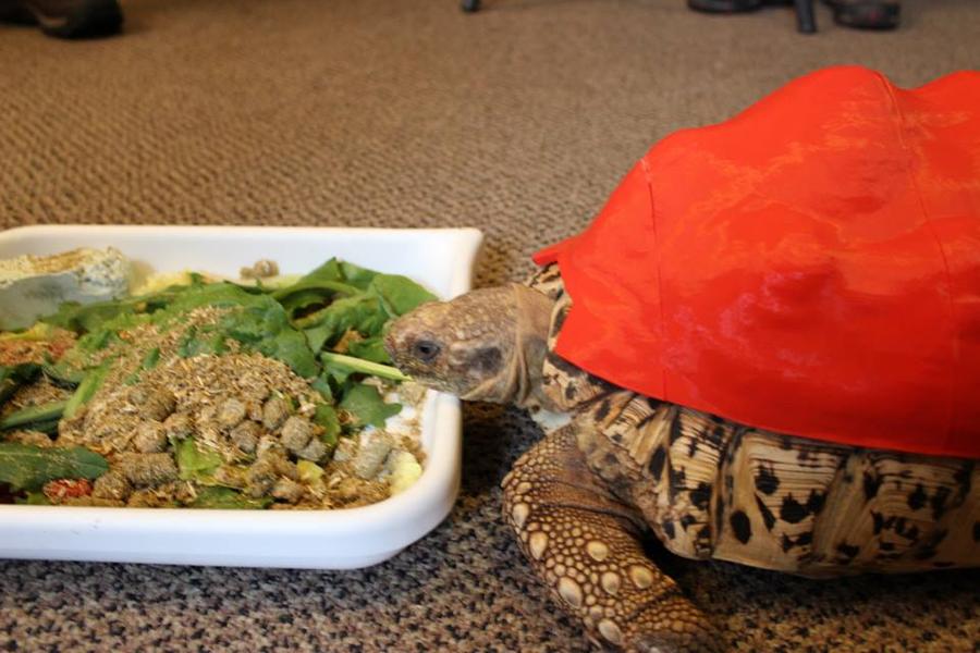 Guscio di tartaruga stampato in 3D – prima versione