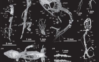 Microtomografia e replica di micro fossili in ambra