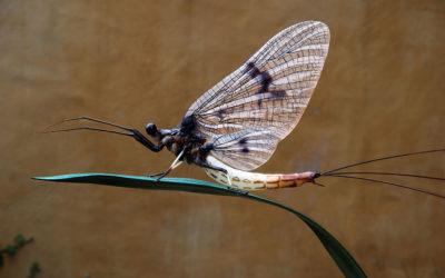 Sorprendenti insetti in stereolitografia