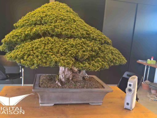 Digitalizzazione di un antico e prezioso bonsai